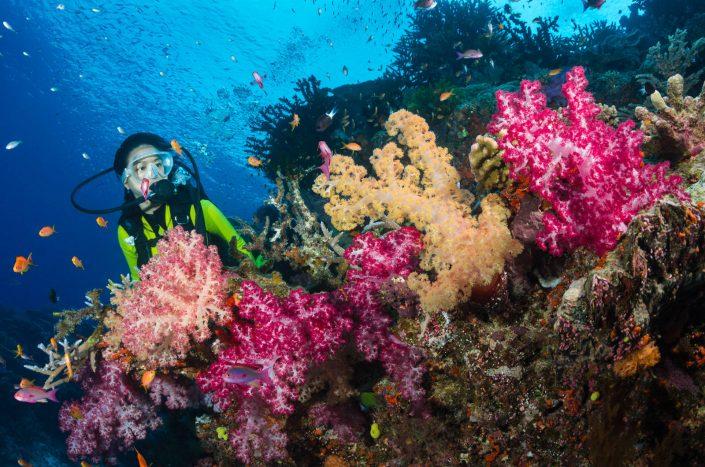 Pete Atkinson-coral reef-soft corals-diver